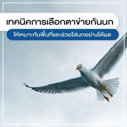 ตาข่ายกันนก, รับติดตั้งตาข่ายกันนก